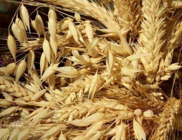 Análisis de micotoxinas en granos, cereales y alimentos