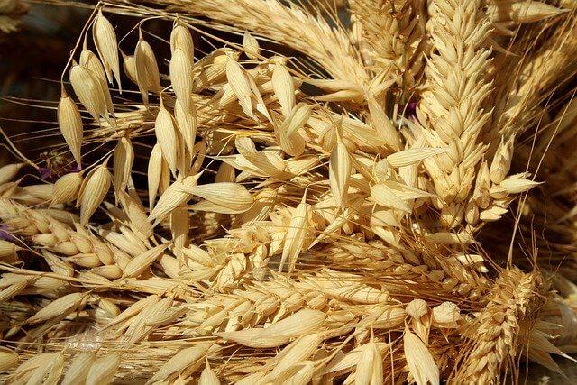 Analisis de micotoxinas en granos, cereales y alimentos